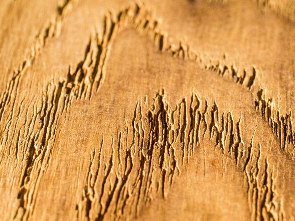 Art Backgrounds Macro Macro Photography Super Macro SuperMacro Wallpaper Wood Wood - Material Wood Art