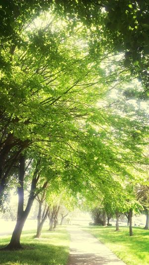 csu Stan trail Running Tree's  Spring