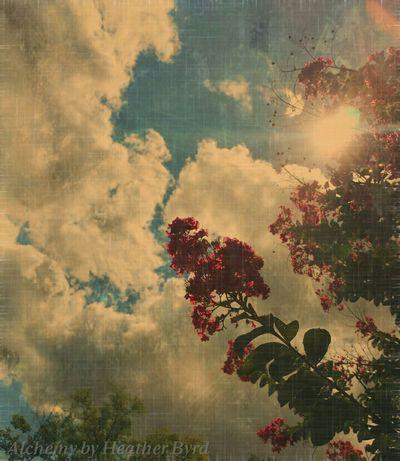 Nature_collection Sky_collection Eye Em Best Shots -Flowers EyeEm Best Shots - Sunsets + Sunrise