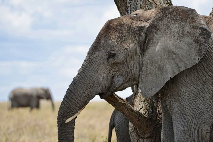 Close-up of elephant on field against sky