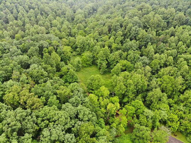 Aerial View Aerial Shot Aeriel Photo Dronephotography Forest Photography Trees Tree Tops Nature Photography Nature Textures and Surfaces Texture Textured  Green Color Treelines Adventure Harmony Forest Green Shrub Healthy Leaves Scene Peaceful Botanical Calm Foliage Park Lakeside Vegetation Soft