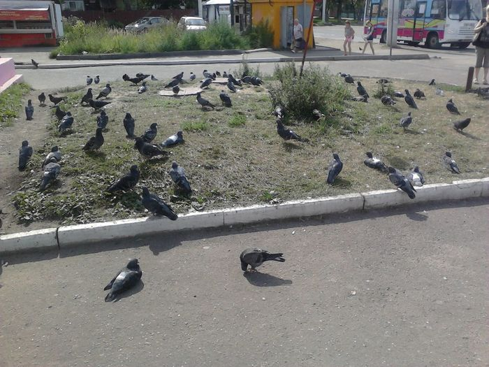 Pigeons Birds Photography Check This Out