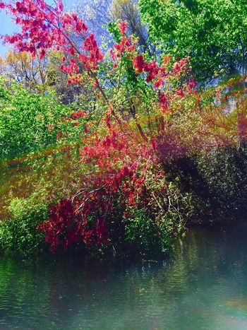 Red out Green Beauty In Nature Branch Flower Green Color Leaf Lush Foliage Nature Outdoors Plant Red Tree Water l Landscape Ponce Deleon Springs River The Great Outdoors - 2016 EyeEm Awards