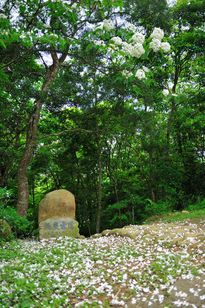 Forest landscape, quiet forest, fresh natural air. Beautiful Green Natural Beauty In Nature Branch Cemetery Day Forest Fresh Grave Growth Leisurely Memorial Nature No People Outdoors Peaceful Surroundings Tombstone Trail Tranquility Tree Tung Blossom White Flowers
