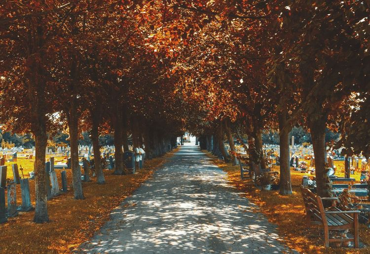Footpath amidst autumn trees in cemetery
