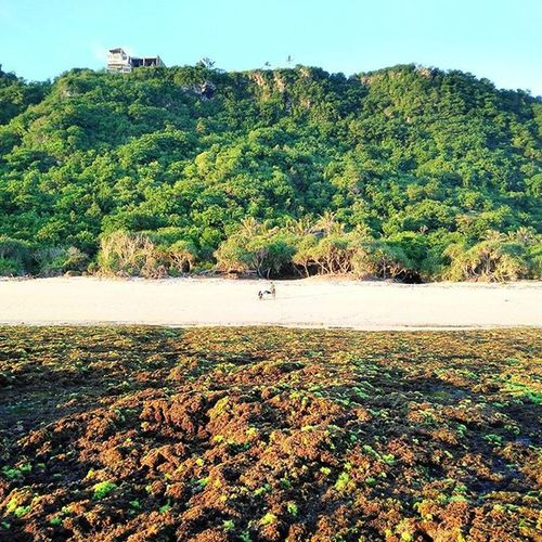 What a beauty 👌😍 Nyangnyangbeach Beach Bali Pecatu Uluwatu OPPO OppoR7 Adventure Weekend