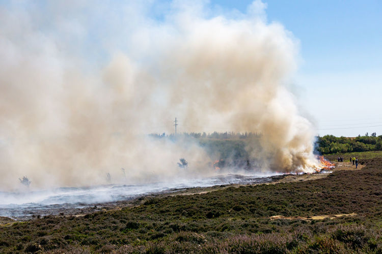 Abbrand alter und trockener Pflanzen am Morsum Kliff Morsum-Kliff Smoke Sylt, Germany Burning Environment Fire Fire - Natural Phenomenon Heather Burning Heide Heide Abbrand Landscape Nature Non-urban Scene Outdoors Smoke - Physical Structure Sylt