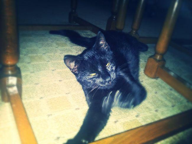 Arrrrr LittleStar Mysweetcat