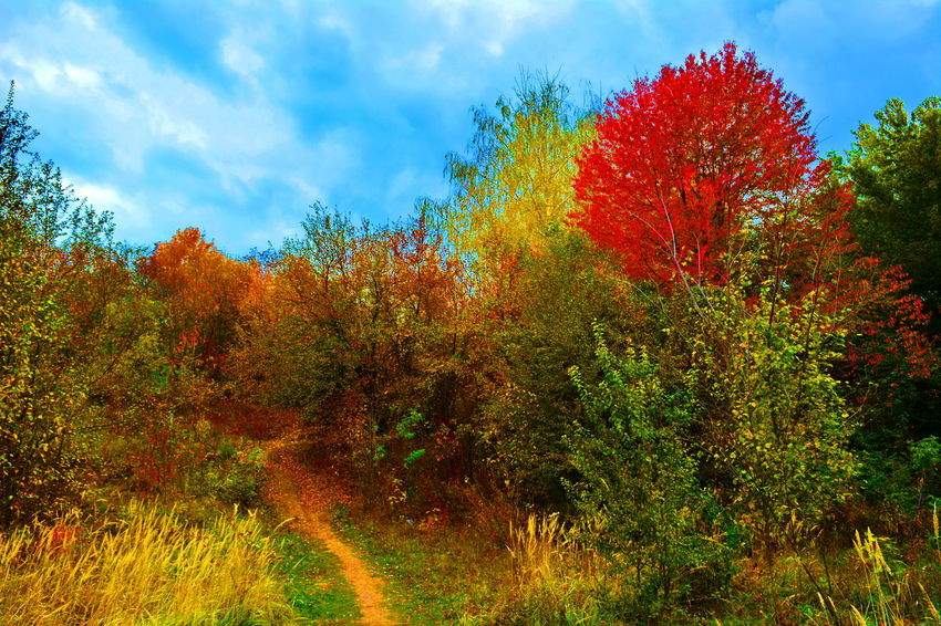 Red Sky Tree Growth Outdoors Nature Cloud - Sky Plant No People Low Angle View Day Green Color Rural Scene Flower Multi Colored Beauty In Nature Close-up Freshness