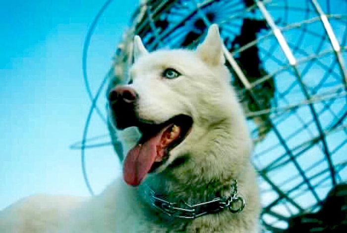 Unisphere Flushing Meadow Park Siberian Husky White Blue Blue Sky Blue Wave Dog Animal Pets Queens NYC New York City Outdoors