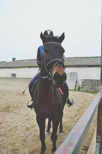 Butiful♥ MyLove❤ Myhorse♡ Mylife ♡