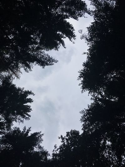 Forest Roof