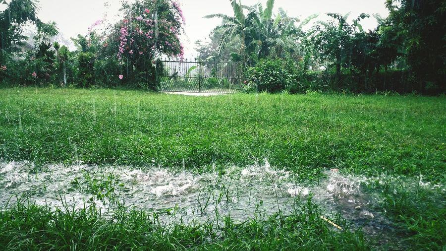 It's A Rainy Day Allahumma Soyyiban Nafi'a Thanks Ya Allah..
