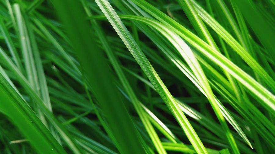 Full frame shot of grass growing on field