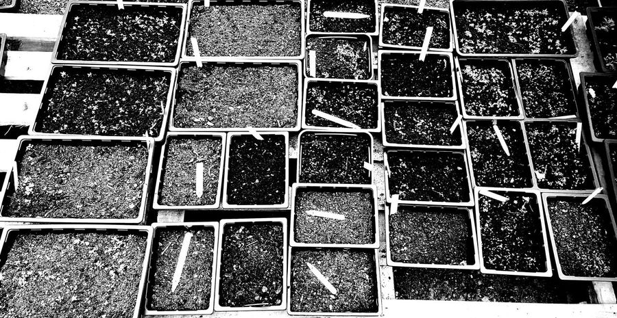 Textures And Surfaces Backgrounds Seeds Growing pots Soilfertility blackandwhite Cottage Garden  Outdoors White Labels
