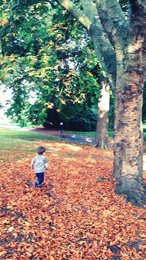 Oscar crunching the leaves! Autumn Leaves Orange Kids Children Family Boys Fun