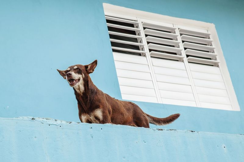 Low angle view of dog on wall against building