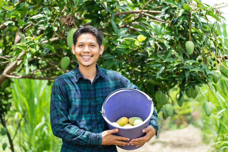 Mangoes picking Asian  Farmer Man Mango Agriculture Day Farmer Food Food And Drink Freshness Front View Fruit Healthy Eating Holding Looking At Camera One Person Organic Outdoors Picking Plant Portrait Smiling Tree Wellbeing Young Adult