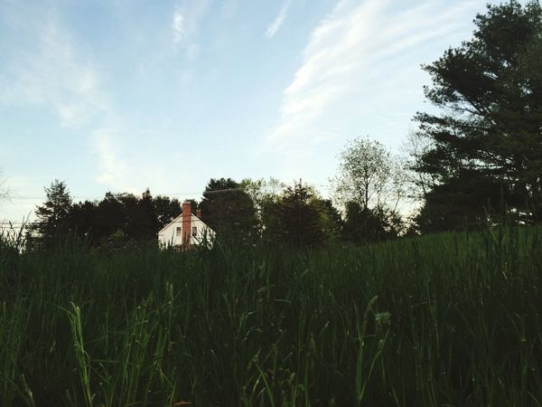 Grass Field Meadow House Low Angle View Nature Hidden Hiding Hiding Places Hidden Naturelovers Farm Countryside Country Life Country Landscape Landscape_Collection Landscape_photography