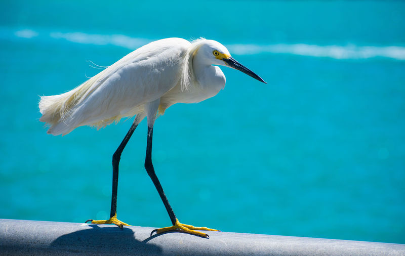 Bird Perching On Railing Against Sea