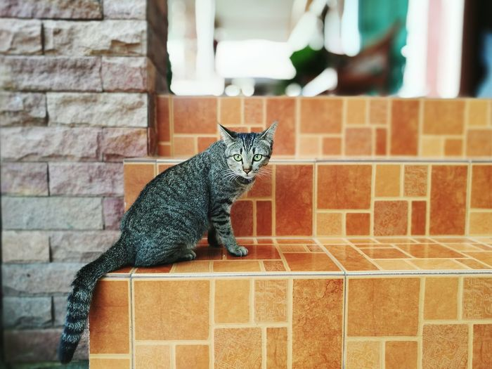Cat Against Brick Wall