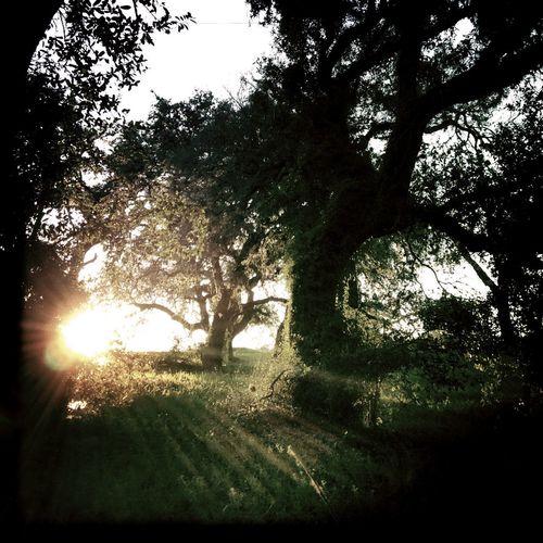 #SanAntonio #Texas xoxo #Hipstamatic #Oggl John S/Blanko C16