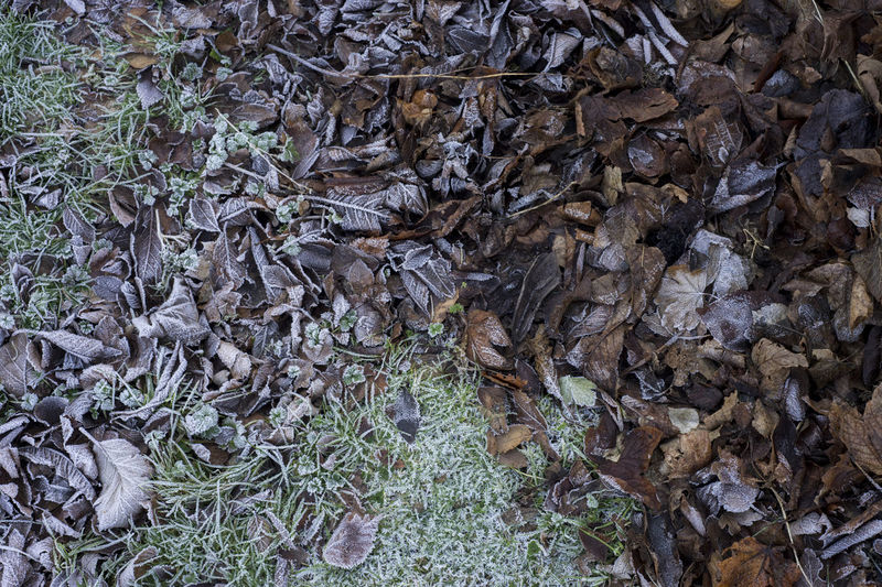 Cold Tone Frost Nature Backgrounds Close-up Cold Cold Temperature Day Foliage Frosty Mornings Full Frame Leaf Leaves Nature No People Outdoors Plant