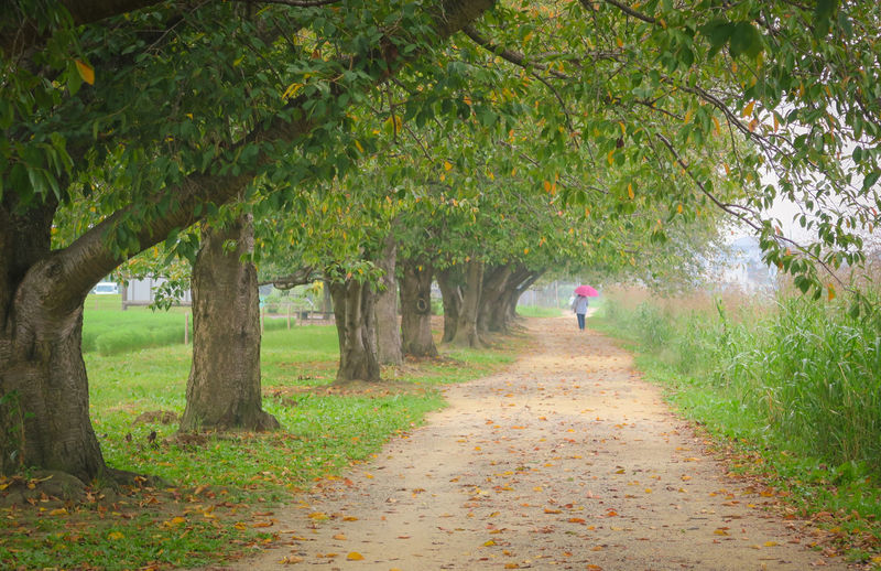 Rear view of person walking on footpath amidst trees