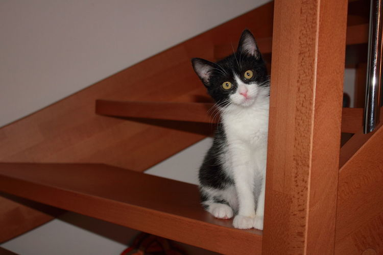 Portrait of cat sitting on wooden steps at home