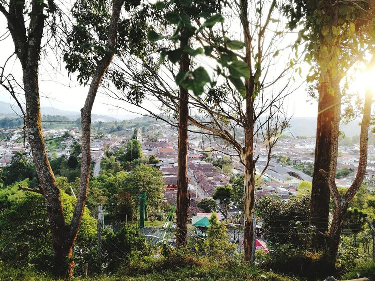 salento, colombia. People Natulareza Sun Town Tree Trunk Tree Area