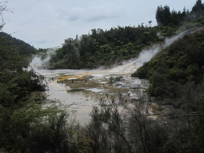Water Plant Tree Sky Scenics - Nature Nature Beauty In Nature No People Environment Land Forest Day Steam Outdoors Growth Motion Non-urban Scene Tranquil Scene Cloud - Sky Power In Nature Hot Spring Flowing Water Flowing Pollution New Zealand Orakei Korako