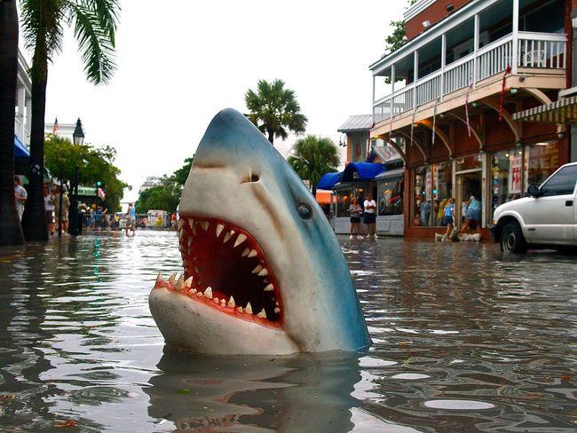 Curiosities Flood Flooding Florida Fun Funny Hai Haiattacke Hochwasser Keywest Keywestflorida Keywestlife Kurios Kurioses  Shark Shark Attack Sharkattack Sharks White Shark überschwemmung