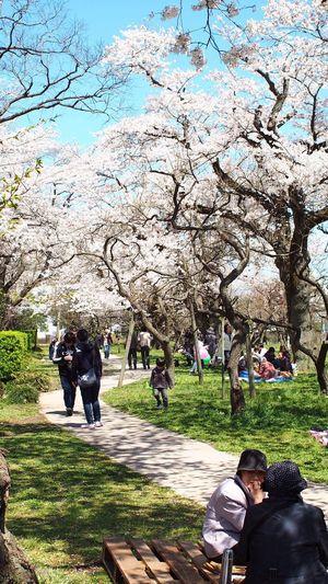 散策、おしゃべり、眺める樹 EyeEm Flower Photowalk CanonFD  Streamzoo #oldlens