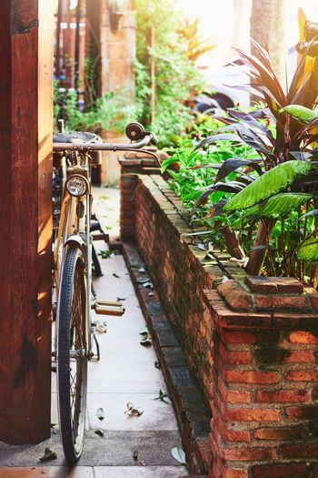 Old retro bicycle Bicycle Transportation Day Outdoors Land Vehicle Plant Architecture Retro Style Classic Time Rusty Metal Old-fashioned Blocks Daylight Daytime Garden The Week On EyeEm