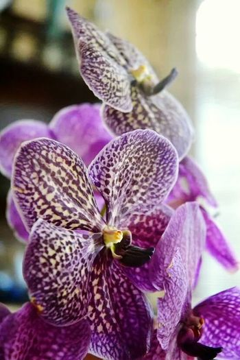 Ishoot MyPicture Mauritius 🇲🇺 Purple Flower Plant Close-up Nature No People Beauty In Nature Orchid Flower Head Outdoors Fragility Day Freshness Orchid Flower Orchidee