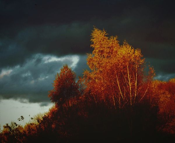 Its getting dark. Tree Nature Sky Beauty In Nature No People Low Angle View Cloud - Sky Tranquility Autumn Outdoors Treetop Storm Cloud Day Fall Colors Fall Photography