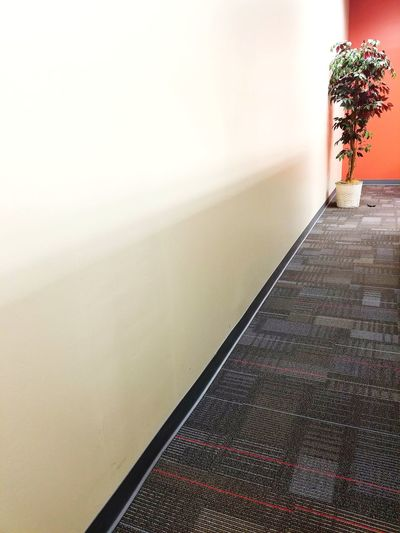 No People EyeEmNewHere Against The Wall Wall Indoors  Office Building Office Blank Wall Office Plant Lonely Solo Single Object