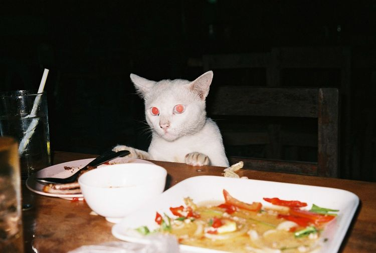 Animal Themes Bowl Cat Cat Eating Day Domestic Animals Domestic Cat Eating Feline Food Food And Drink Freshness Indoors  Mammal No People One Animal Pets Plate Sitting Table Whitecat