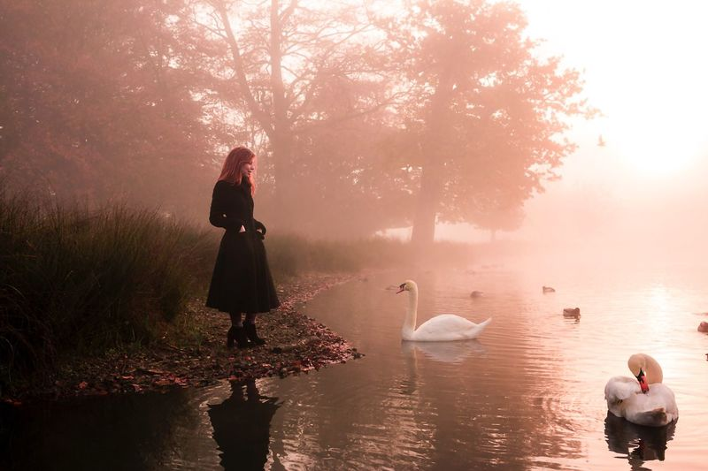 Full Length Bird Nature Reflection Outdoors Animals In The Wild Water Lake Real People Tree Beauty In Nature Day Sky Men Wading One Person Swan Young Adult Mammal People London Richmond
