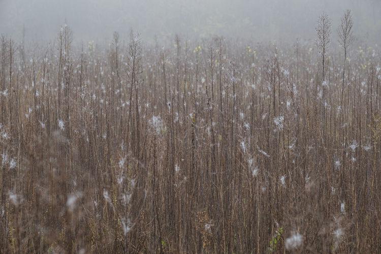 Full frame shot of plants on field during rainy season