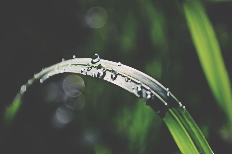 Macro shot of raindrops on grass blade