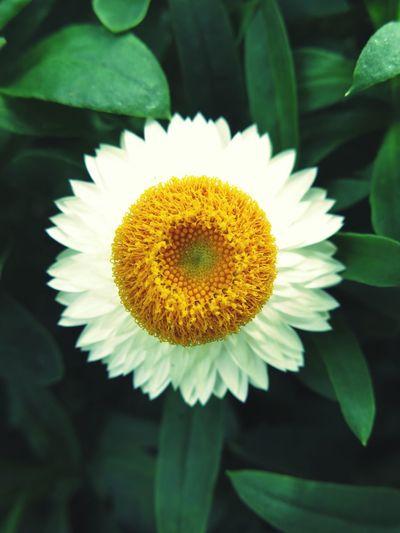 First Eyeem Photo Flower Gardenbythebay