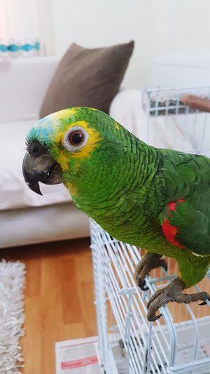 My Parrot ,