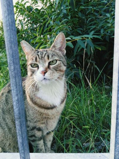 Domestic Cat Cat Domestic Animals No People Pets Feline Nature Outdoors Beauty In Nature Lovely Garden Gates Eye Cateyes Green Eyes