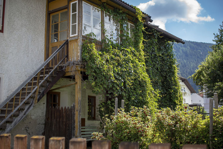 Abandoned Buildings Architecture Building Building Exterior Built Structure Creeper Plant Day Green Color Growth House Ivy Low Angle View Nature No People Outdoors Plant Residential District Roof Sky Tree Window