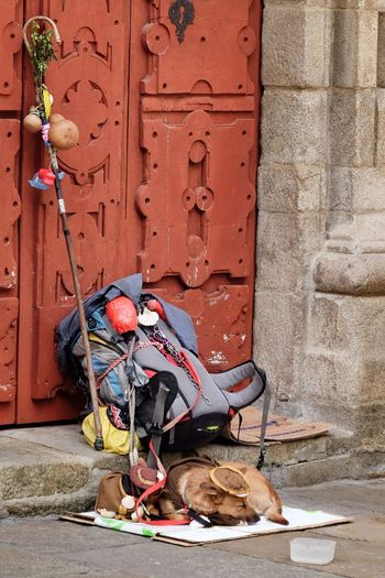 Tired pilgrim Wall - Building Feature No People Day Architecture Mammal Pets Animal Themes One Animal Domestic Animals Built Structure Domestic Animal Entrance Door Canine Dog The Street Photographer - 2018 EyeEm Awards