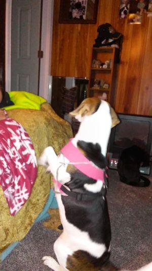 Look At Me Sitting Pretty Taughtself Dog Eyeemdoglovers Indoors  MyNameIs TIGER Babygirl Nov2016 Indoors  EyeemNorthCarolinaUSA Eyeemphotography