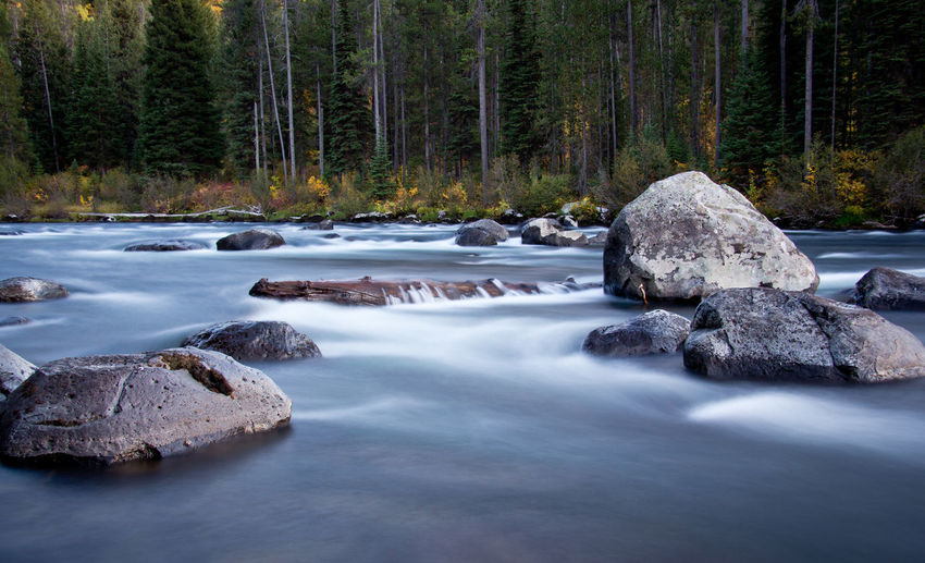 Rocks in river at forest