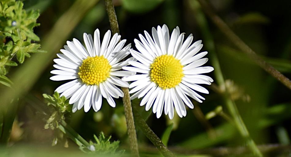 Flower White Color Nature Flower Head Insect Petal Beauty In Nature Plant Outdoors Day Summer Yellow Fragility Close-up Uncultivated No People Springtime Rural Scene Landscape Multi Colored