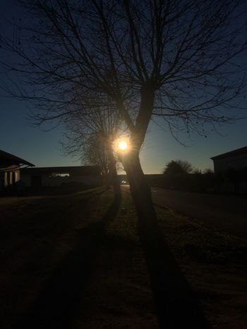 Sun Lens Flare Sunlight Sunbeam Sunset Tree Bare Tree Sky Outdoors Building Exterior Road No People Nature Built Structure Beauty In Nature Architecture Day The Great Outdoors - 2017 EyeEm Awards